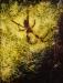 golden-orb-spider ( oil - 90 x 60cm )